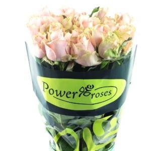 Eigen rozen kwekerij pakken